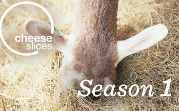 Cheese Slices Cheese Documentary Season 1 Will Studd