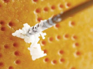 Parmigiano Reggiano Will Studd Cheese Slices
