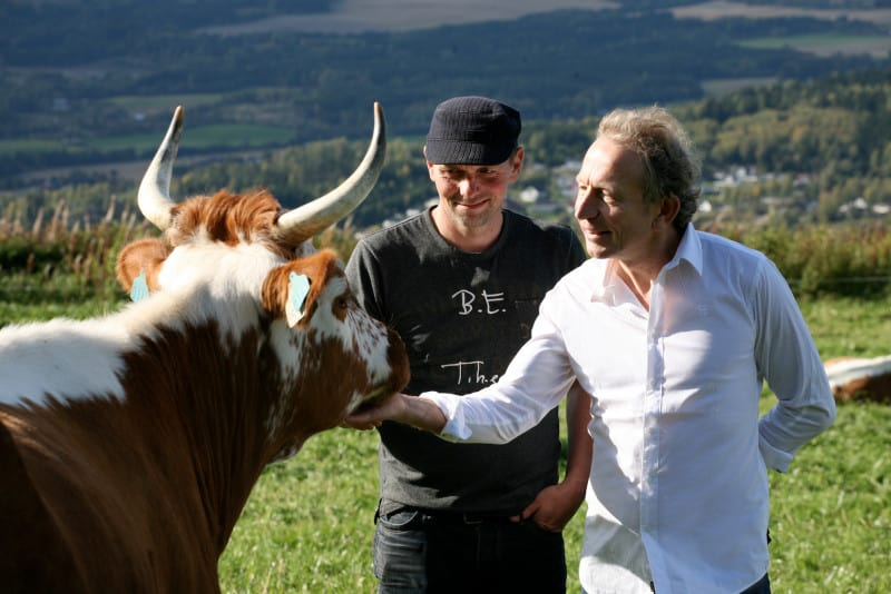 Will Studd patting a cow in Norway