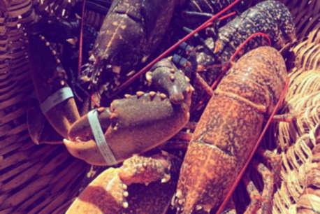 Crayfish Ceviche Recipe By Tetsuuya Wakuda