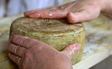 Wheel of Abruzzo cheese